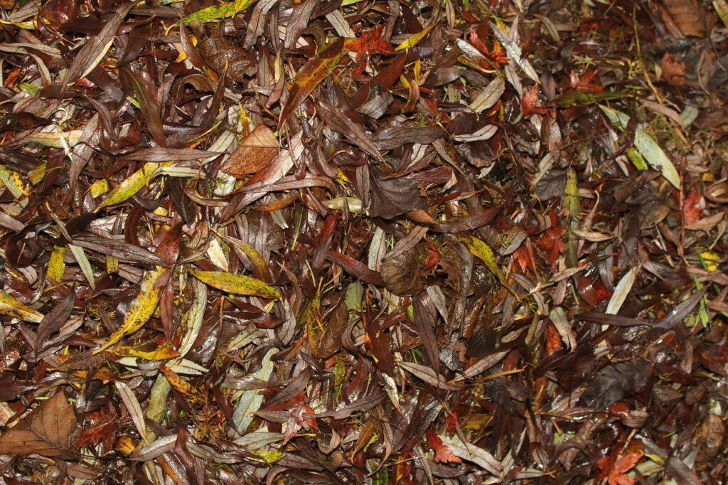 leaves-4630607_1280