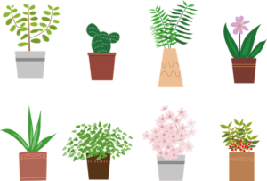 potted-plant-5335130_640